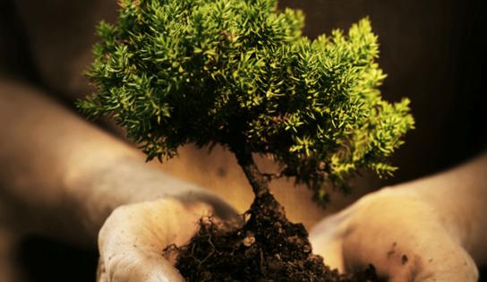 1 MISSION = 1 ARBRE PLANTE – CETUP S'ENGAGE AVEC PLANETE URGENCE